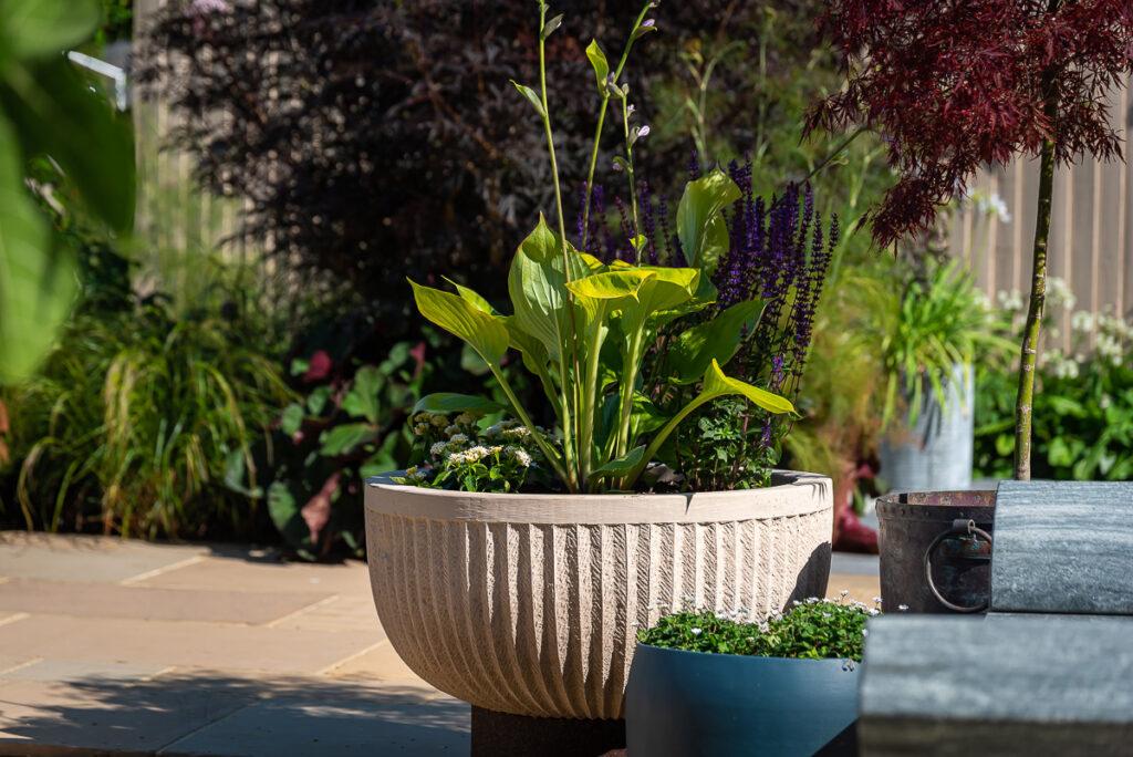 Pure Allium planter