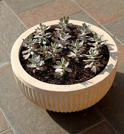 Large handcrafted sculptural sandstone planter