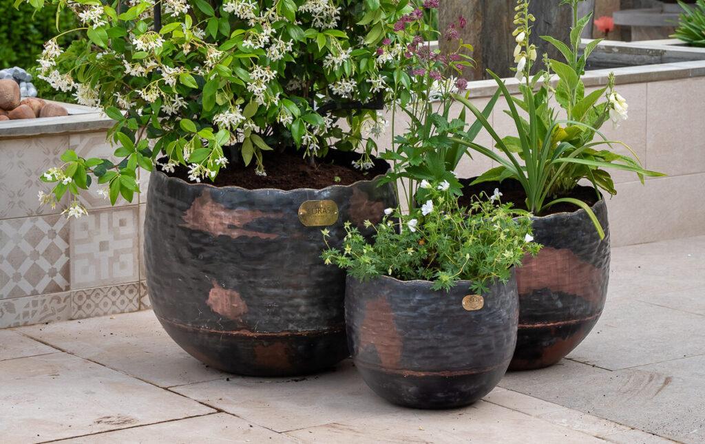 Copper Beech vintage planter