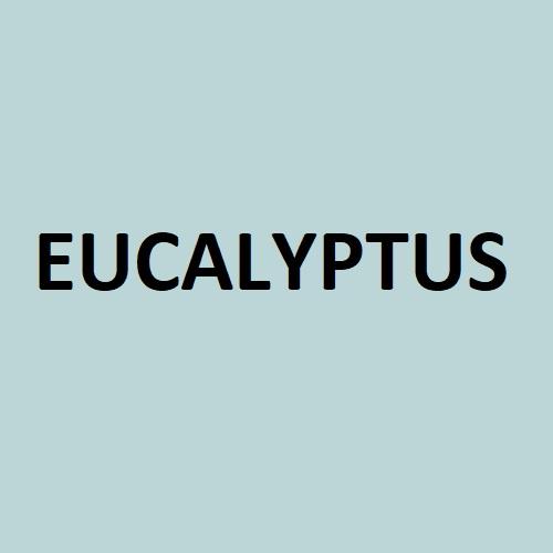 eucalyptus colour swatch