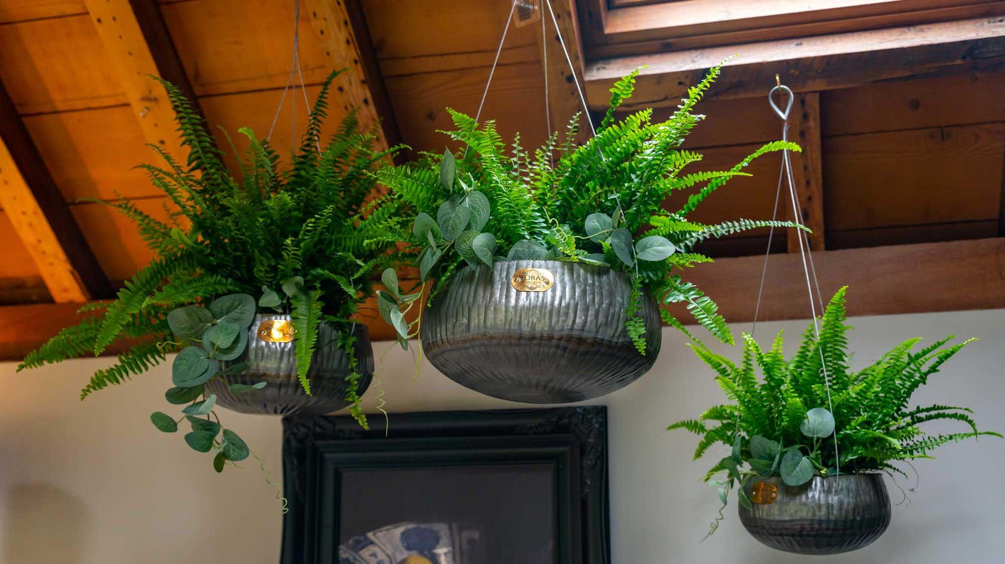 barberry vintage hanging planter set