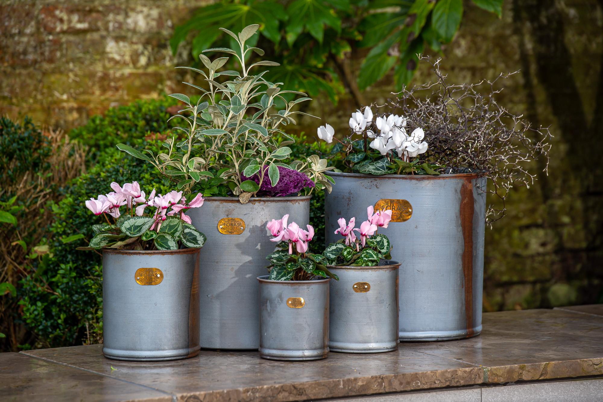 Hibiscus Planters